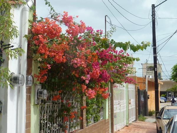 P1050538-Cancun.JPG