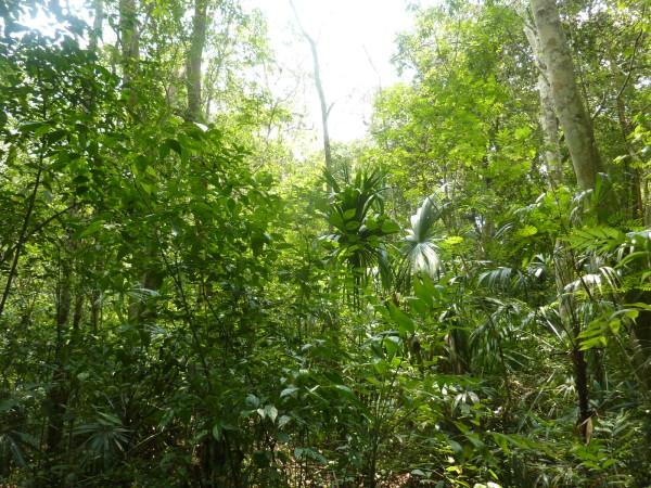 P1060057-Tikal.JPG