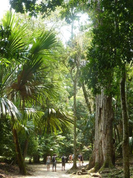 P1060064-Tikal.JPG