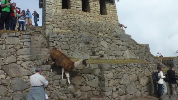 P1150776-Machu-Picchu.JPG