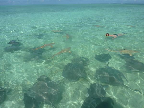 P1180054 Bora Bora