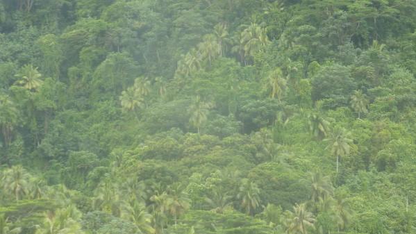 P1180414 Tahiti