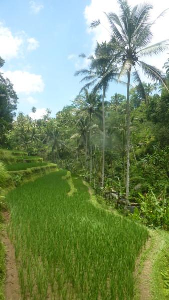P1200344 Gunnung Kawi Bali