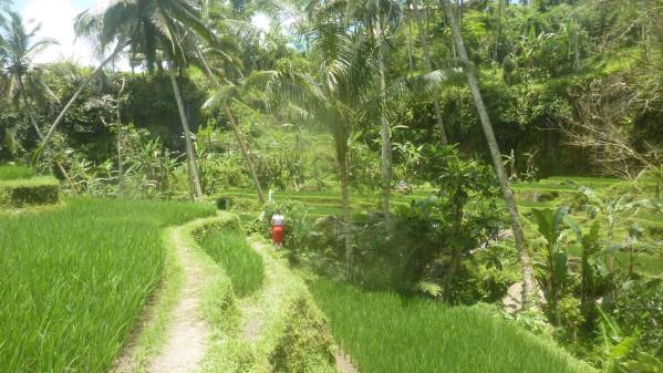 P1200355 Gunnung Kawi Bali