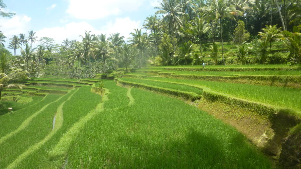 P1200382 Gunnung Kawi Bali