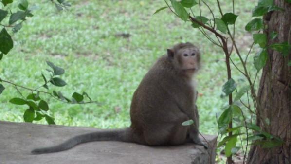 P1000128 Phnom Penh