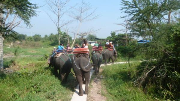 P1050549 Elephants Dumnoen Saduak