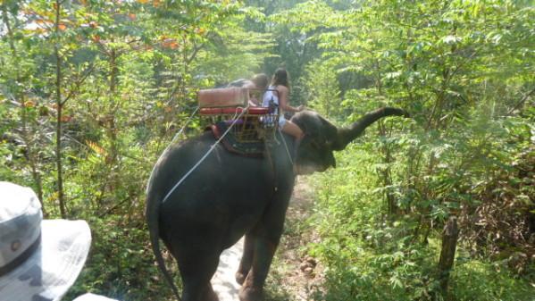 P1050550 Elephants Dumnoen Saduak