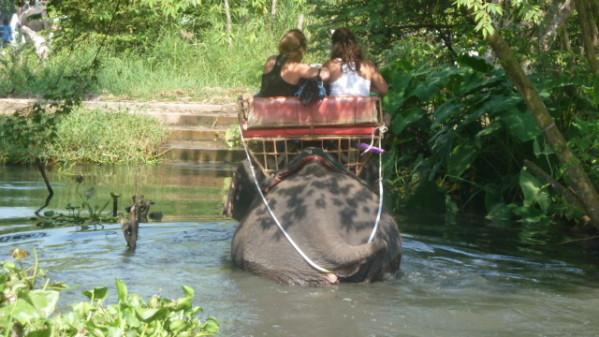P1050552 Elephants Dumnoen Saduak