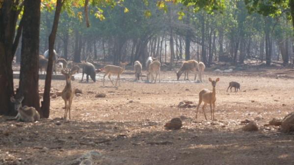 P1050570 Tigres Dumnoen Saduak