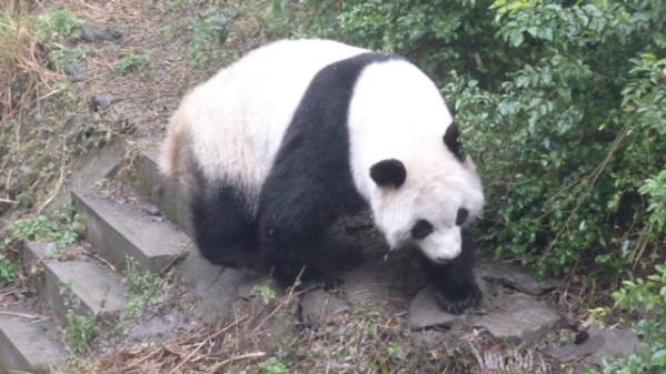 P1050879 Chengdu