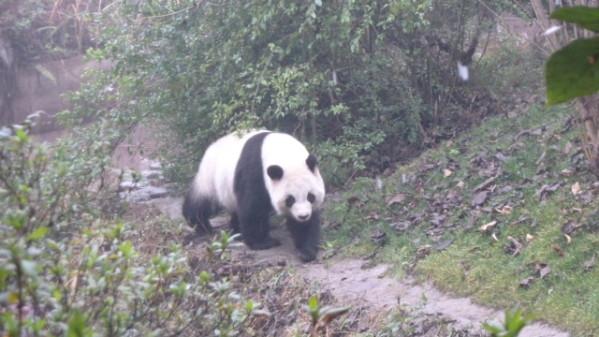 P1050881 Chengdu