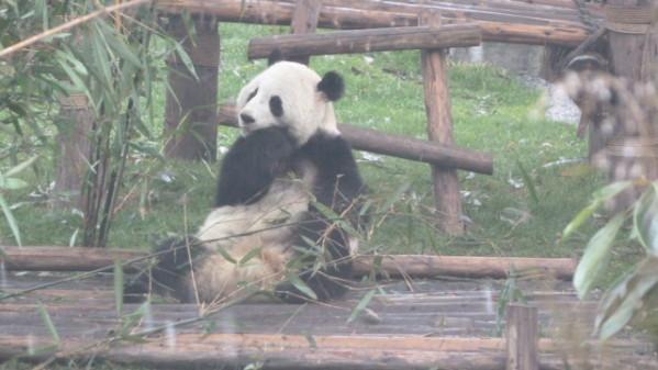 P1050882 Chengdu