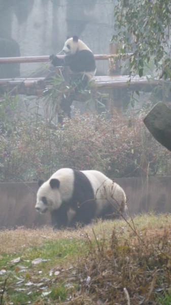 P1050884 Chengdu
