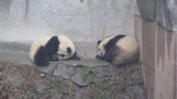 P1050885 Chengdu
