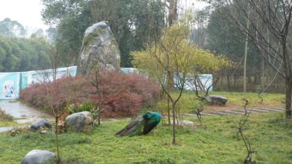 P1050889 Chengdu