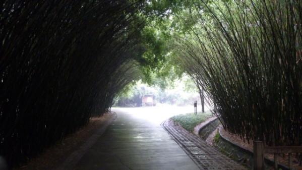 P1050890 Chengdu