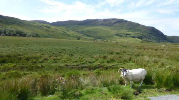 P1270112 Ile de Skye