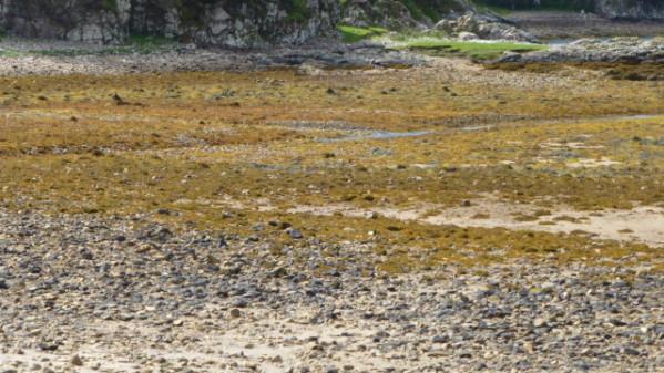P1270115 Ile de Skye