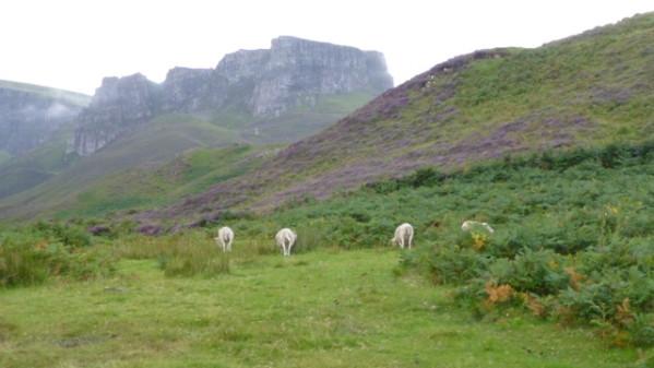 P1270172 Ile de Skye
