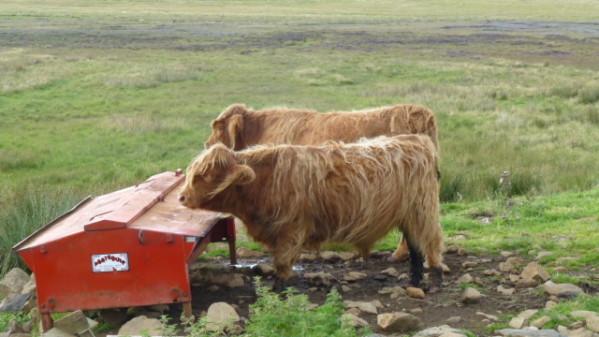 P1270174 Ile de Skye
