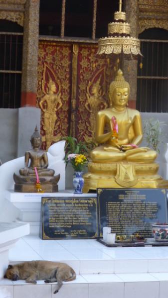 P1270662 Chiang Mai