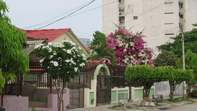 IMG_3480 Barranquilla (11)