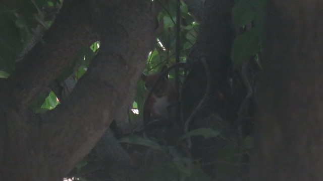 IMG_3480 Barranquilla (9)