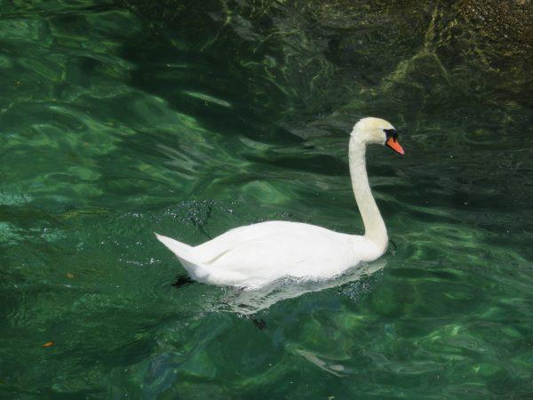 Début du Lac de Côme